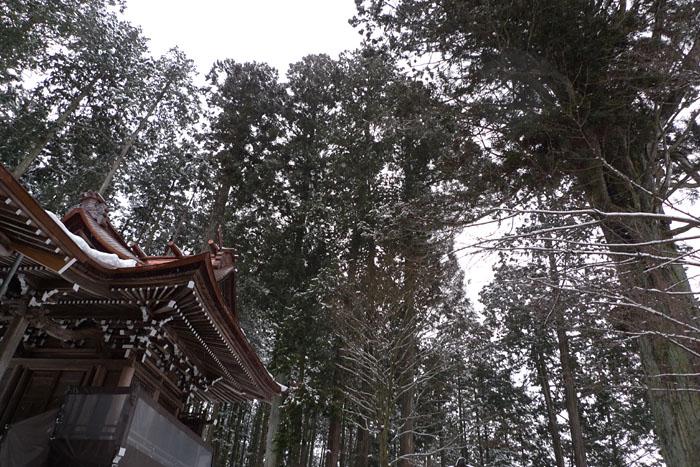 新宮神社 元旦 4