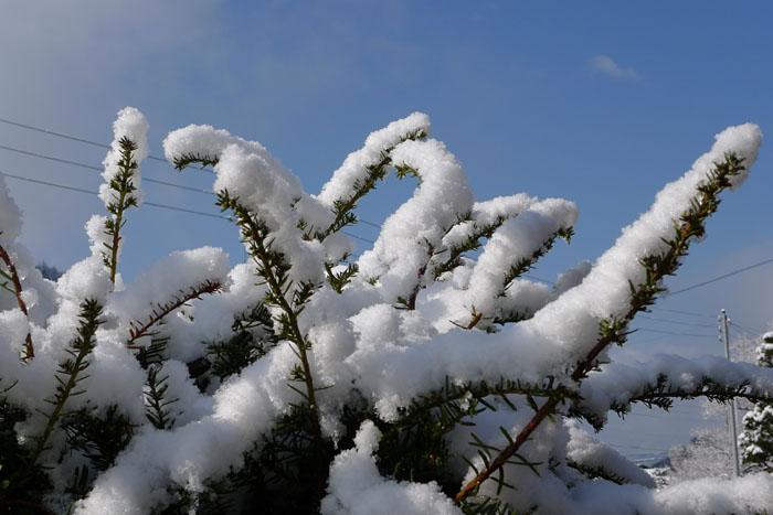 雪景色 再び 2013年4月 2