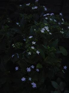 ajisaihanabi2010.jpg