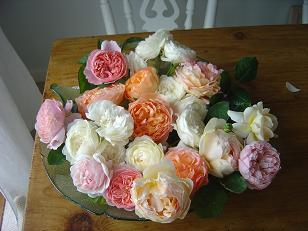 rosedish.jpg