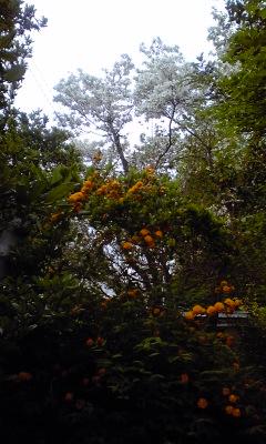 花水木と八重山吹