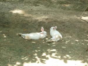 やる気のないウサギ達