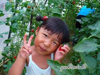 トマト収穫☆あやちゃん♪