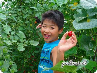 トマト収穫☆ゆうくん