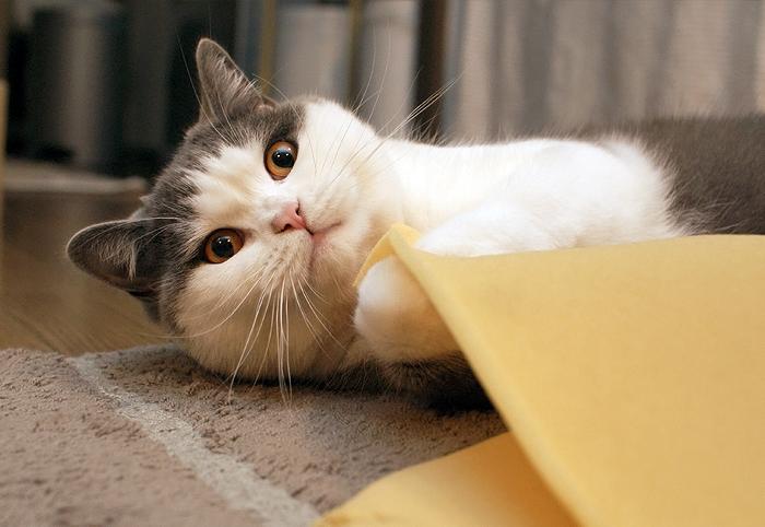 捨てる者あれば、拾う猫あり