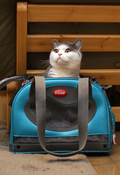 小さくなったと思われるキャリーバッグ