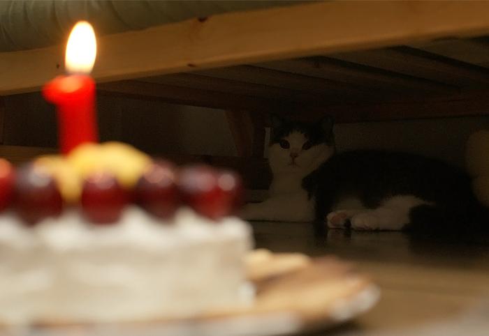 HAPPY BIRTHDAY ゆきち