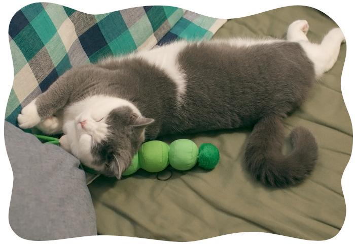 イモムシは枕友達