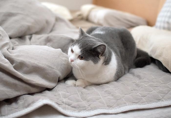 ベッドでおじゃま