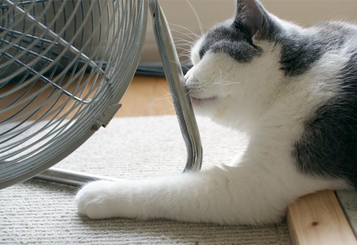 扇風機に、ちゅぅ