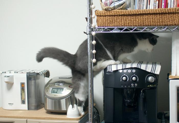 コーヒーネコメーカー