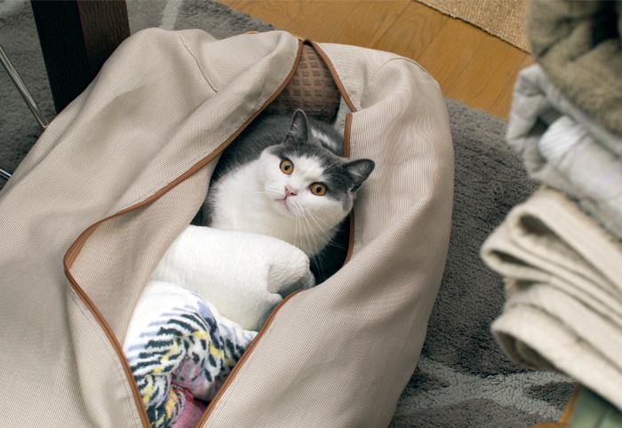 もこもこ毛布たち