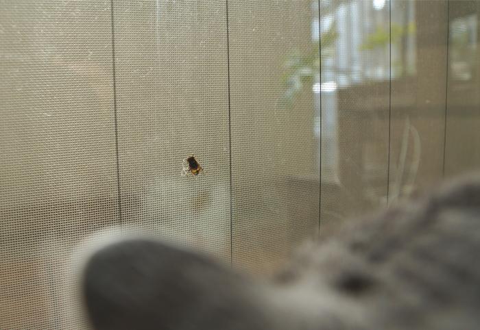ハチハエとしっぽ