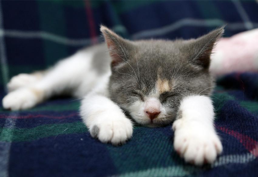 まえあし、のっびーんと寝