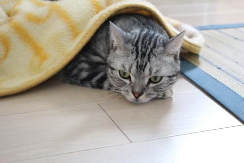 連休最終日のお出掛け1