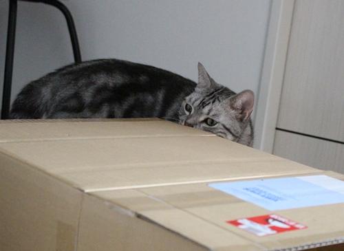箱のお片付け1