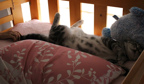 猫のいる幸せ2