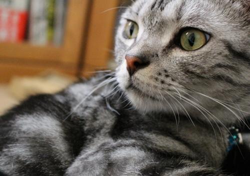 膝乗り猫1