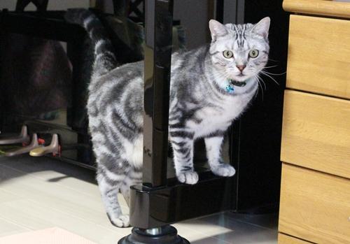 紐好きな猫1