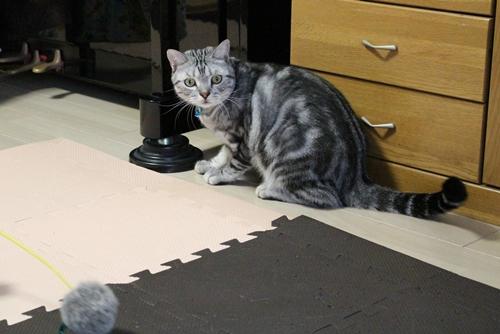 紐好きな猫3