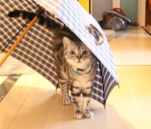 傘を干すのは気をつけて3