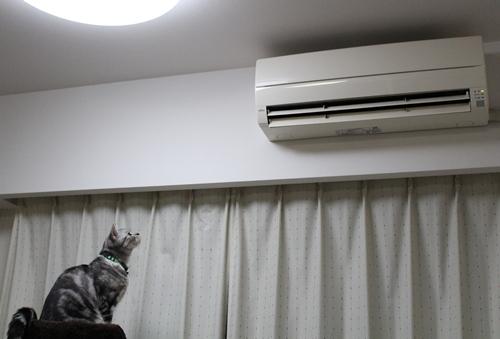 暖かさにテンションアップ1