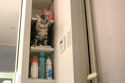 洗面台の棚2