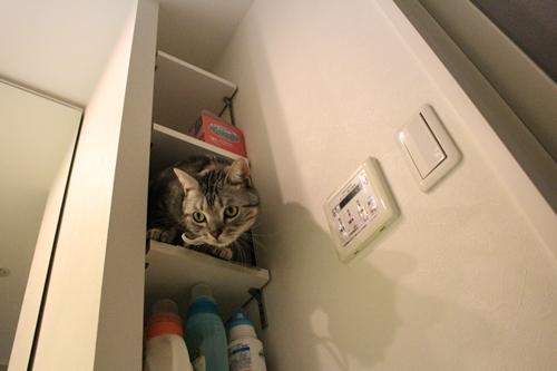 洗面台の棚5
