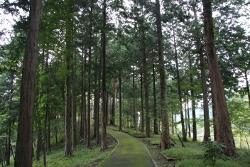 ゆらぎの森