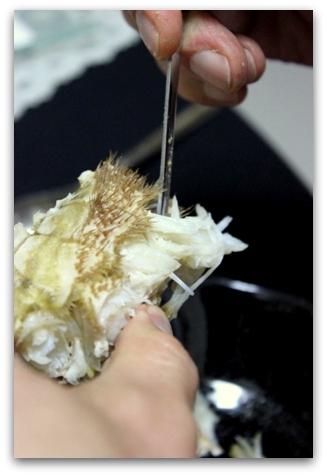 オホーツク毛蟹 (14)
