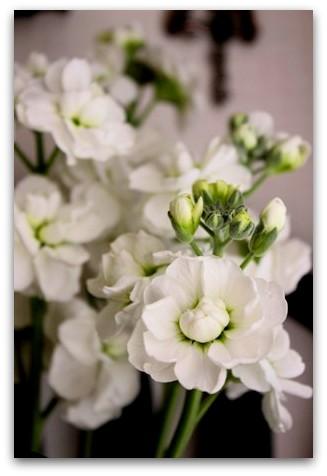 ホワイトデーのお花 (3)