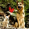 Doggies_Friends.jpg