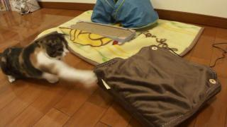 猫パンチ3