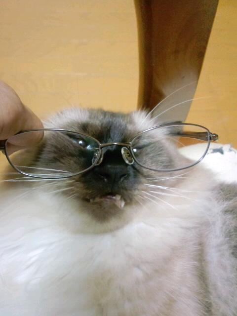 夢庵の老眼鏡と愛猫のコラボ・・うにゃ~~~