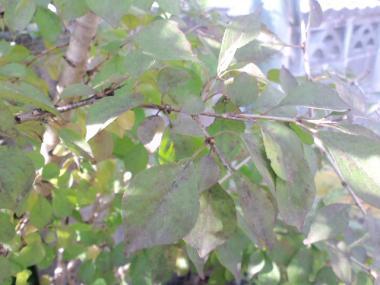 20111127124219.jpg