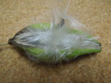 キジョラン袋果と白毛のある種子