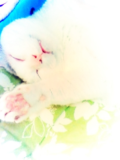 fc2blog_20140912174607f61.jpg
