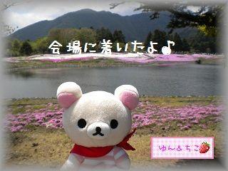 ちこちゃん日記★78★富士芝桜まつり★-1