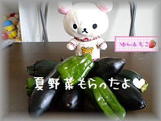 ちこちゃんの観察日記★3★夏野菜もらったの-1