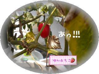 ちこちゃんの観察日記★6★赤くて可愛いよ♪-1