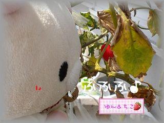 ちこちゃんの観察日記★6★赤くて可愛いよ♪-2