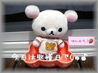 ちこちゃんの観察日記★8★今日は収穫日♪-1