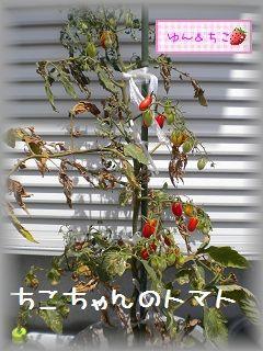 ちこちゃんの観察日記★8★今日は収穫日♪-2