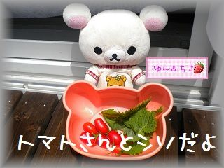 ちこちゃんの観察日記★8★今日は収穫日♪-5