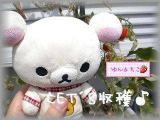 ちこちゃんの観察日記★8★今日は収穫日♪-3
