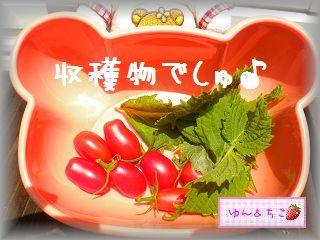 ちこちゃんの観察日記★8★今日は収穫日♪-4