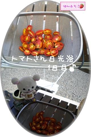ちこちゃんの観察日記★9★♪夏の恵みをギュッと濃縮♪準備編-2