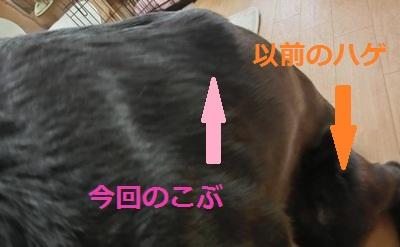 201212214.jpg