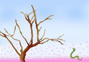 ハル君桜1.2