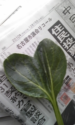 双子な小松菜